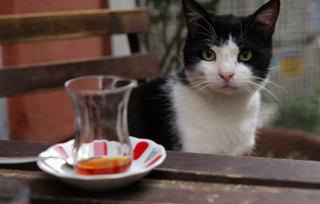 Kedi - Von Katzen und Menschen